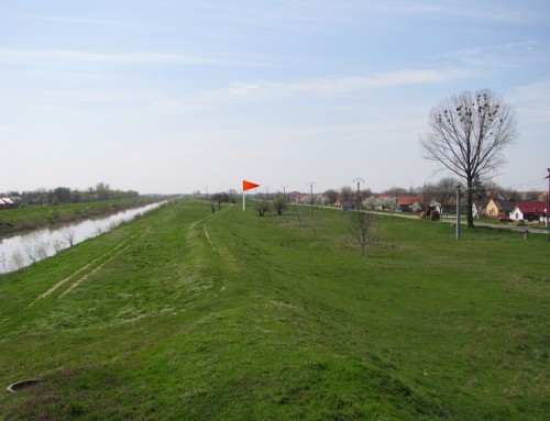 10.000 de copaci vor fi plantati la Sanmihaiu Roman