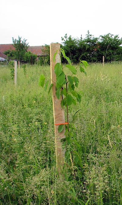 parc mosnita plantat de ecostuff
