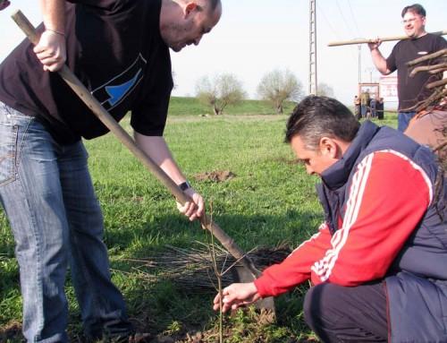 Sambata au fost plantati primii 5.500 de stejari in Padurea Mea
