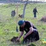 padurea mea campanie plantare copaci judetul timis